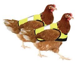 poules.png